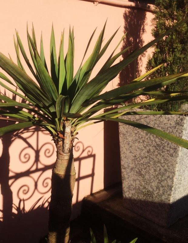 palm tree-light